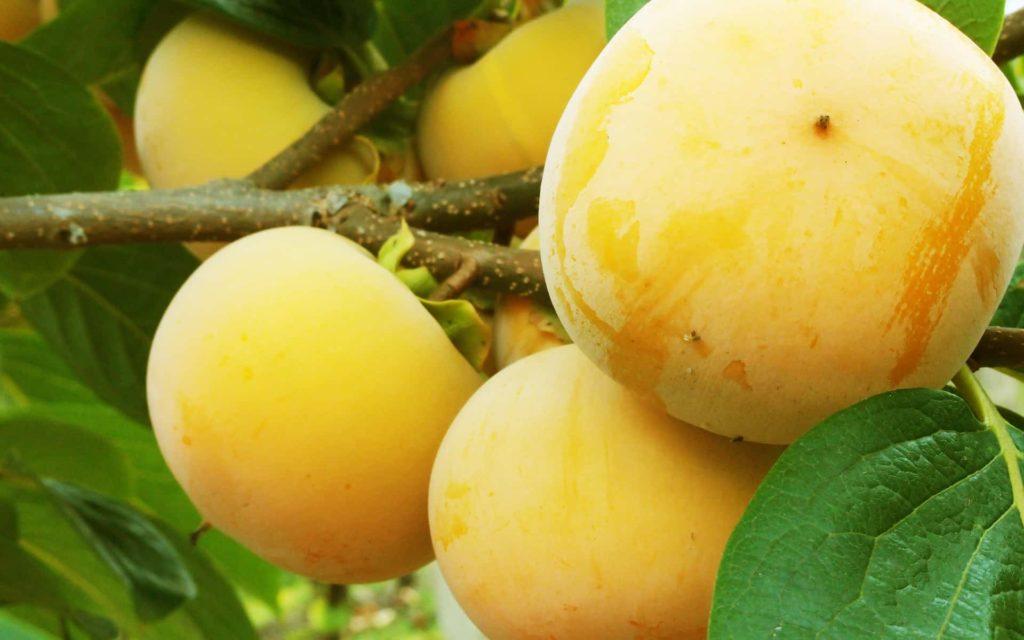 Netradiční ovoce